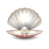 Closeup för skal för pärla för öppet hav för realistisk vektor härlig naturlig på vit bakgrund Designmall, clipart stock illustrationer