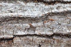 Closeup för trädskäll Royaltyfri Bild
