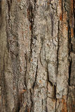 Closeup för trädskäll som är användbar som textur eller bakgrund royaltyfri foto