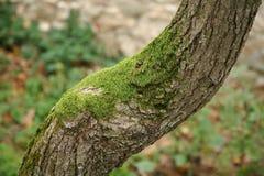 Closeup för trädstam royaltyfri fotografi