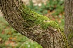 Closeup för trädstam royaltyfri bild