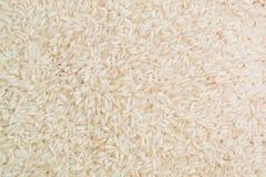 Closeup för vita ris Arkivbilder