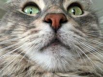 Closeup face of a cat stock images