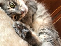 Closeup face of a cat lying on bed Stock Image