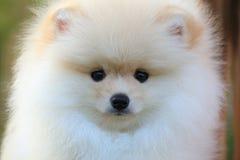 Closeup face dog Royalty Free Stock Image