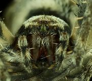 Closeup face of spider. Cute close up face of spider Stock Photos