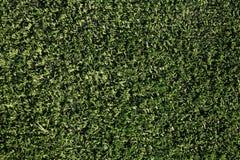 Closeup fake grass Stock Photos