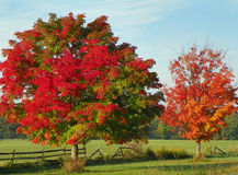 Closeup of Fall in the country with red maple trees, split rail. Autumn scene in the country showing brilliant orange and red maple trees along a split rail stock photo