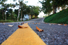 Closeup the fallen leaves. Closeup the fallen leaves on the road Royalty Free Stock Image