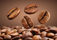 Closeup falling coffee bean on brown background royalty free stock images