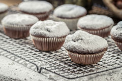 Closeup of falling powder sugar on vanilla muffins. On old wooden table Royalty Free Stock Photos
