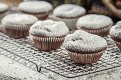 Closeup of falling powder sugar on vanilla muffins Royalty Free Stock Photos