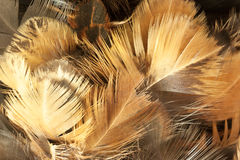 Closeup of feather duster. Royalty Free Stock Photo