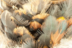 Closeup of feather duster. Stock Images