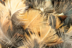 Closeup of feather duster. Royalty Free Stock Image