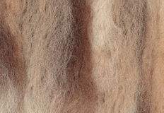 Closeup felted wool in brown shades Royalty Free Stock Photos
