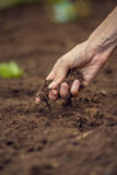 Closeup of female hand  holding a handful of rich fertile soil t Royalty Free Stock Image