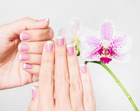 Closeup of female hands and fingers manicured Royalty Free Stock Photography