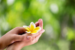 Closeup of female hands holding a tropical flower Stock Photography