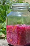 Closeup Fermented Red and Green Cabbage and Carrots. Also called Cultured vegetables, gallon jar of fermented green cabbage, red cabbage, and carrots. Water and royalty free stock photos