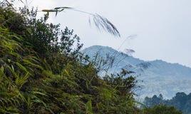 Closeup of fern infront of hills of cameron highland tea plantation stock photos