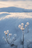 Closeup of few snowy plants and a snowbank Stock Photo
