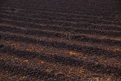 Closeup of field of air drying coffee beans stock photo