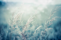 Closeup of Field grass at Morning sunlight. Summer nature landscape royalty free stock images