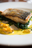 Closeup of Filleted Fish on Spinach Leaves and Mussel Sauce Stock Image