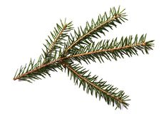 Fir tree branch isolated on a white background Stock Photos