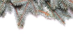 Closeup of fir tree branch Stock Photos