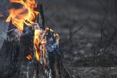 Closeup of flaming stump Royalty Free Stock Photos