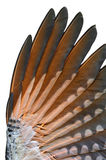 Closeup of Flicker bird under wing Royalty Free Stock Photography