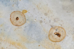 Closeup a the flint stone Royalty Free Stock Images
