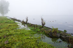 Closeup of flooded grassland on the banks of a river Stock Photography
