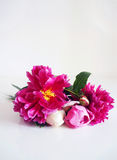 Closeup of floral bouquet made of peony flowers lying on the white table. Stock Photos