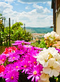 Tuscan Flowers Stock Images