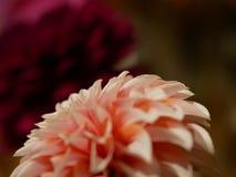 Closeup Flower stock photos