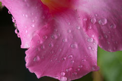 Closeup of Flower With Water Drops Stock Images