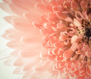 Closeup flower royalty free stock image