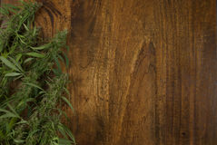 Closeup of flowering Cannabis sativa weed plants on wooden background with copy space royalty free stock image