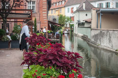 Closeup of flowers in border channel in Colmar Stock Photography