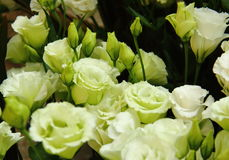 Closeup of flowers. The closeup of Eustoma russellianum flower with beautiful petals Stock Images