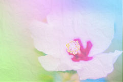 Closeup Flowers with Soft Focus Color Filtered. Stock Photos