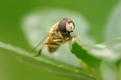 Closeup fly Stock Photo