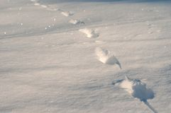 Closeup of footprints in fresh snow in the frosty morning. Animal tracks in the deep snow on the field Royalty Free Stock Photography