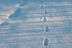 Closeup of footprints in fresh snow in the frosty morning. Animal tracks in the deep snow on the field Royalty Free Stock Images