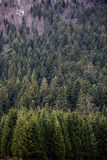 Closeup of forest in Bavaria Stock Photography