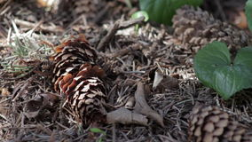 Closeup of a forest floor stock video footage