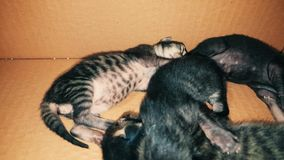New born baby kittens sleeping together in a carton box. Closeup of four new born kittens sleeping together in a carton box stock video footage